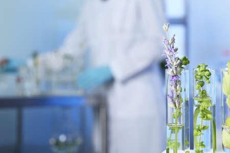 Tubos de ensayo con diferentes plantas en laboratorio, primer plano. Espacio para texto