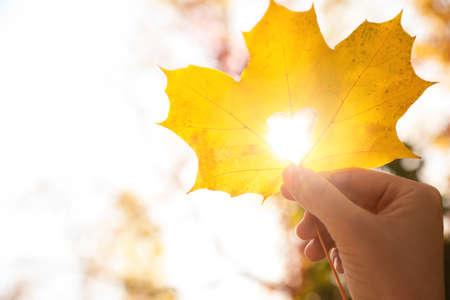 Woman holding sunlit leaf with heart shaped hole outdoors, closeup. Autumn season 免版税图像