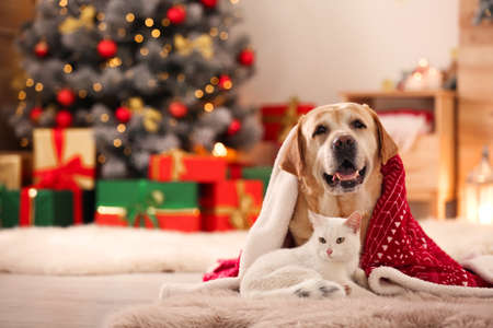 Adorable dog and cat together under blanket at room decorated for Christmas. Cute pets