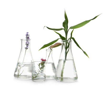 Laboratory glassware with different plants on white background Banque d'images