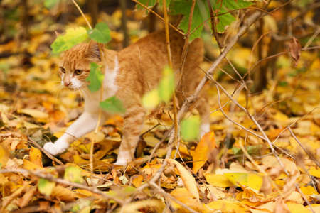 Adorable cat on colorful leaves in autumn park
