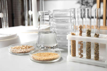 Glassware with seeds samples on light table in laboratory