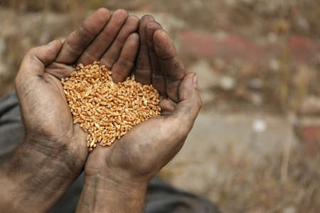 Poor homeless man with wheat grains outdoors, closeup