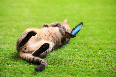 Cute tabby cat with beautiful Blue Morpho butterfly on green grass