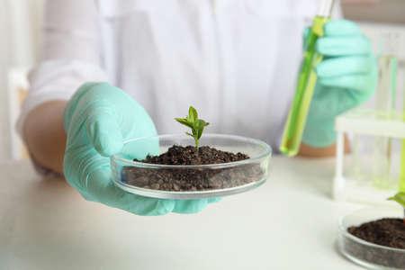 Wissenschaftler, der Petrischale mit Erde und gekeimter Pflanze über weißem Tisch hält, Nahaufnahme. Biologische Chemie