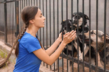Female volunteer near dog cage at animal shelter outdoors