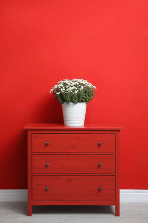 Pot with beautiful chrysanthemum flowers on cabinet against red wall. Space for text