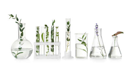 Test tubes and other laboratory glassware with different plants on white background