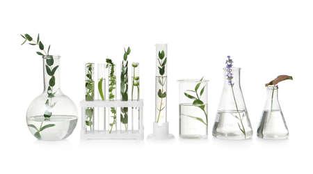 Tubes à essai et autre verrerie de laboratoire avec différentes plantes sur fond blanc