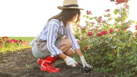 Woman working with metal rake near rose bushes outdoors. Gardening tool