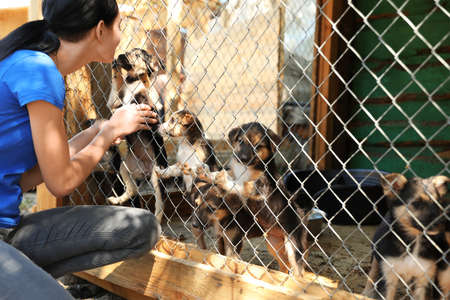 Woman near cage with homeless dogs in animal shelter. Concept of volunteering