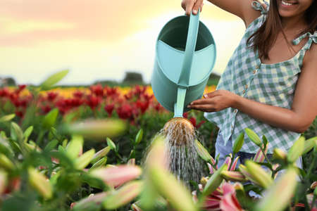 Young woman watering flowers in lily field, closeup with space for text. Gardening tools Stock Photo