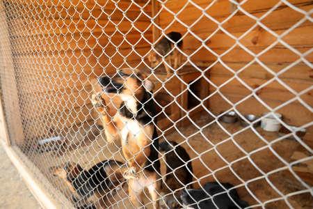 Cage avec des chiens sans-abri dans un refuge pour animaux. Concept de volontariat Banque d'images