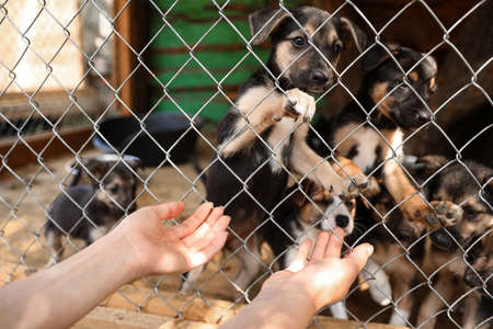 Woman near cage with homeless dogs in animal shelter, closeup. Concept of volunteering Standard-Bild
