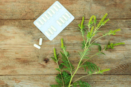 Ragweed (Ambrosia) branch and pills on wooden table, flat lay. Seasonal allergy