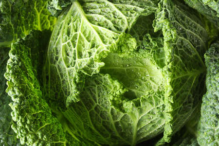 Fresh green savoy cabbage as background, closeup