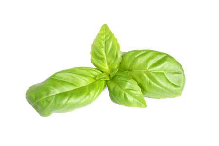 Frische grüne Basilikumblätter isoliert auf weiß