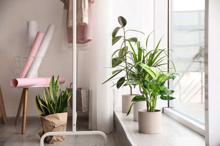 Different potted plants near window at home