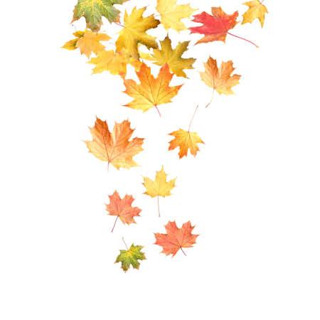 Beautiful autumn leaves falling on white background