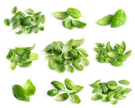 Set van verse groene basilicumblaadjes op witte achtergrond