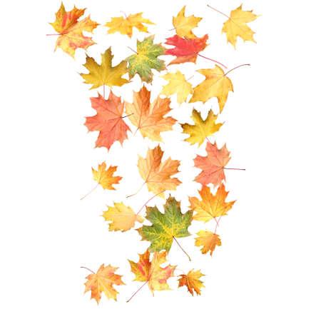 Schöne Herbstblätter fallen auf weißem Hintergrund