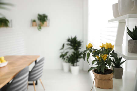 Beautiful potted plant on white shelf in light room. Home decoration Foto de archivo - 135488880