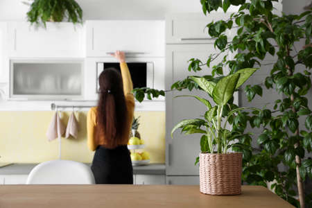 Woman in modern kitchen, focus on green plant. Home decoration