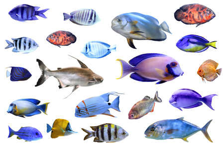 Set of different tropical fishes on white background