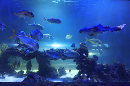 Different tropical fishes and turtle swimming in clear aquarium water Imagens