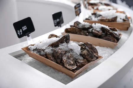 Fresh oysters with ice on display. Wholesale market