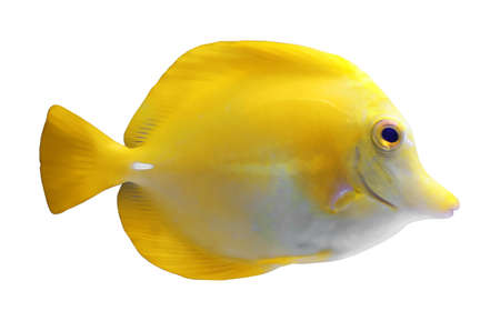 Beautiful bright tropical fish on white background Stock Photo