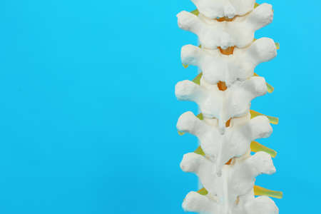 Artificial human spine model on blue background, closeup. Space for text
