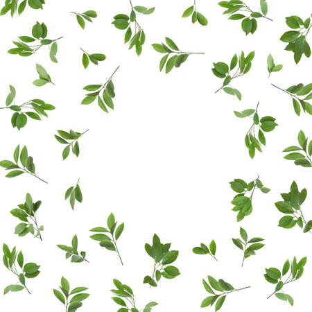 Frame made of fresh citrus leaves on white background. Space for text