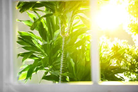 Hermosa vista a través de la ventana en el jardín por la mañana
