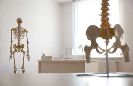 Human skeleton and spine models in orthopedist's office Stockfoto