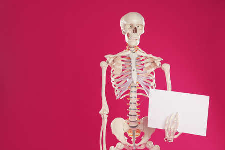 Artificial human skeleton model with blank paper sheet on crimson background. Space for text Banco de Imagens