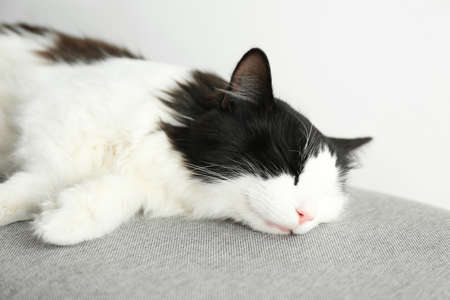 Cute cat relaxing on grey fabric. Lovely pet