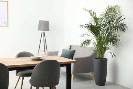 Beautiful potted palm in modern living room
