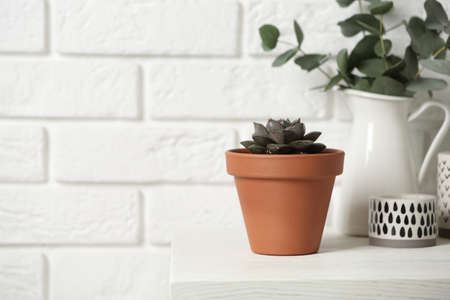 Beautiful succulent on wooden table near brick wall, space for text. Home plant