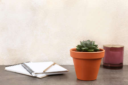 Beautiful succulent and notebooks on grey stone table. Home plant