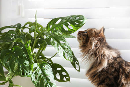 Adorable cat and houseplant near window at home Stock Photo
