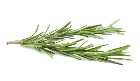Frischer grüner Rosmarin getrennt auf Weiß. Aromatisches Kraut Standard-Bild