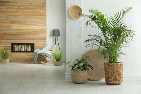 Houseplants in wicker pots on floor indoors. Interior design