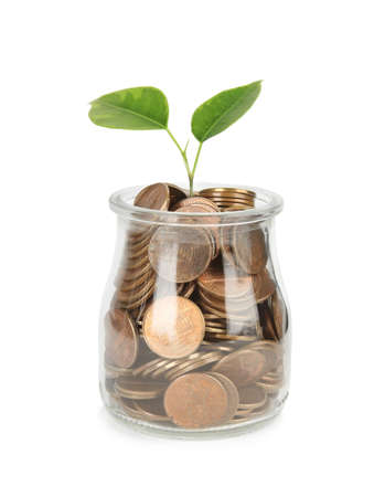 Glass jar with coins and plant isolated on white