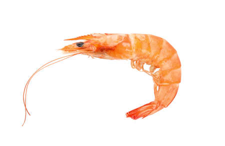 Delicious cooked whole shrimp isolated on white