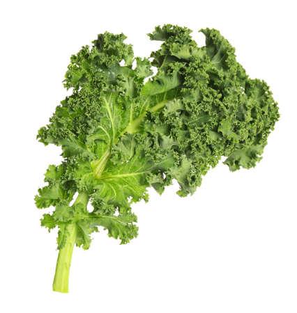 Frisches grünes Grünkohlblatt isoliert auf weiß Standard-Bild