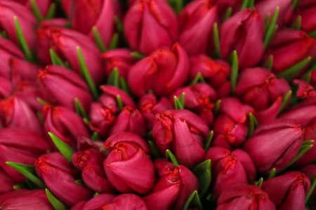 Beautiful bouquet of tulip flowers as background, closeup