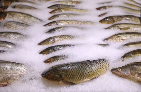 Fresh fish on display with ice at wholesale market