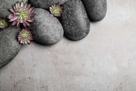 Spa stones and astrantia flowers on grey table, flat lay. Space for text