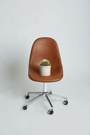 Chair with cactus on white background. Hemorrhoids concept Reklamní fotografie
